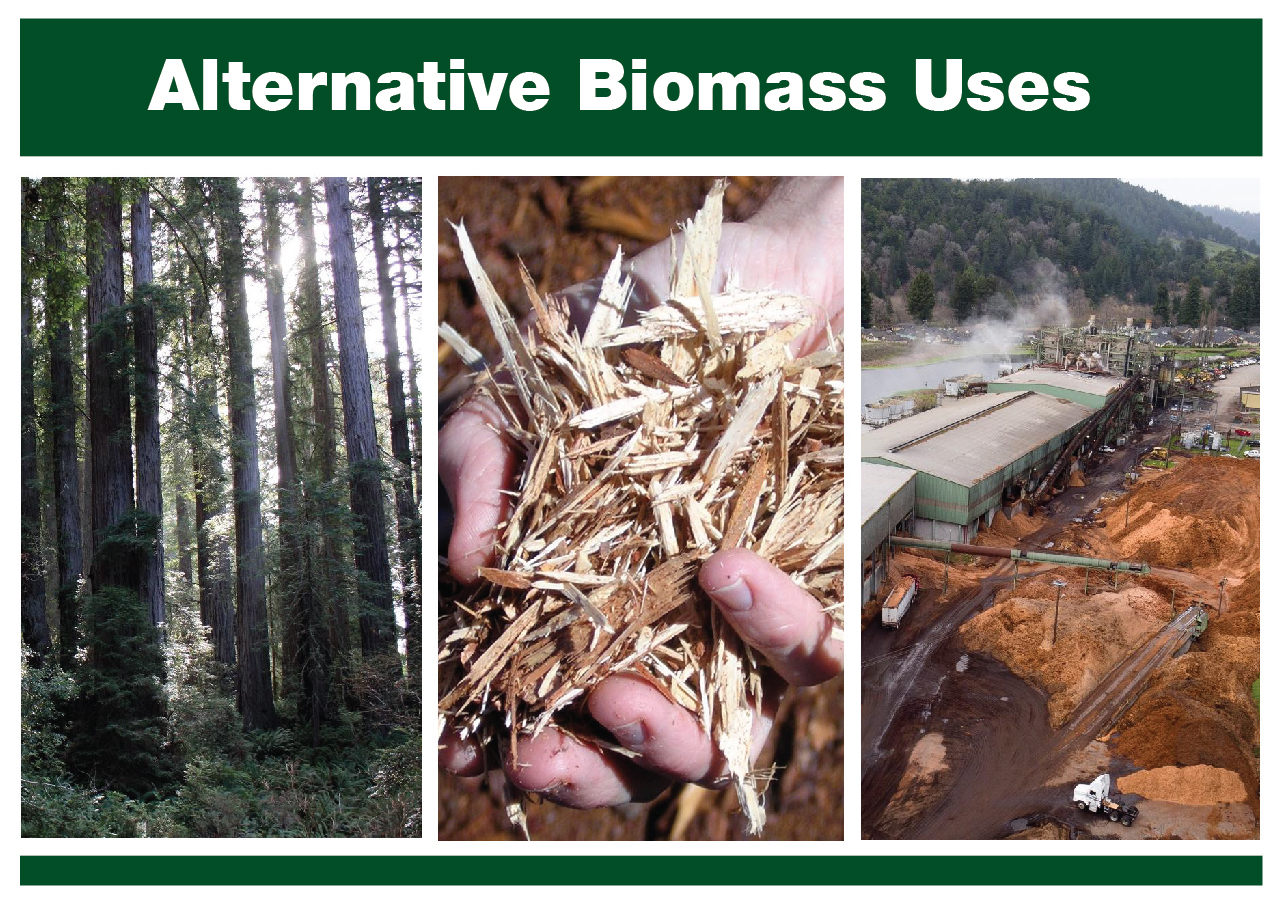 Three small images of biomass plants, trees, and someone holding biomass material