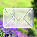 transparent envelope in front of lavender bush